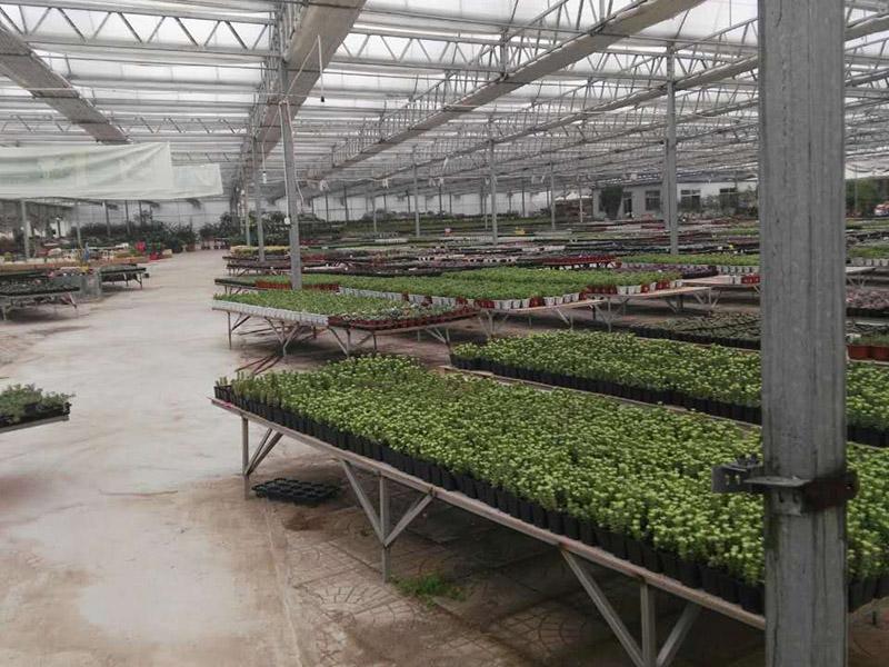 薄膜温室大棚建造,温室大棚制造商