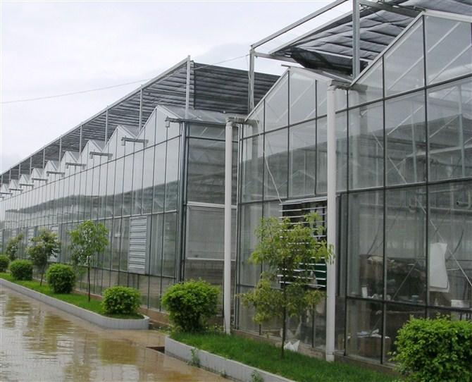 薄膜连栋温室建造 山东温室大棚供应