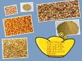 求购玉米、大豆、高粮