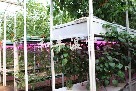 气雾培 专业的立体栽培提供商,当属和丰温室工程