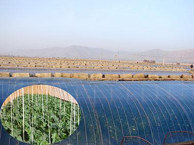 供应EVA膜——EVA膜厂家一润农膜更专业