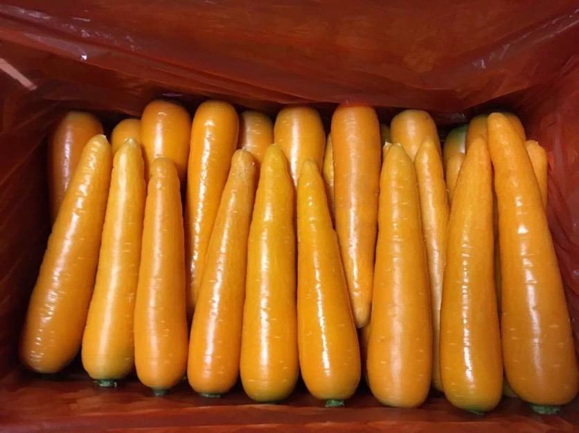 供应潍坊热销胡萝卜,莱芜胡萝卜栽培技术