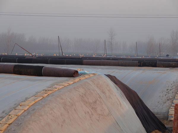 河北冬暖式蔬菜大棚 想建日光温室就到润峰温室工程