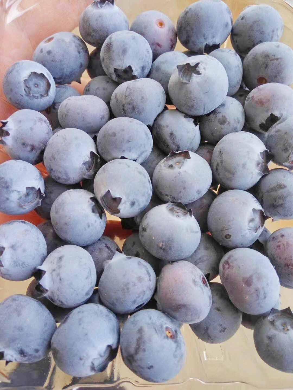 绿色家园生物科技是优质的蓝莓批发商-青岛蓝莓采摘