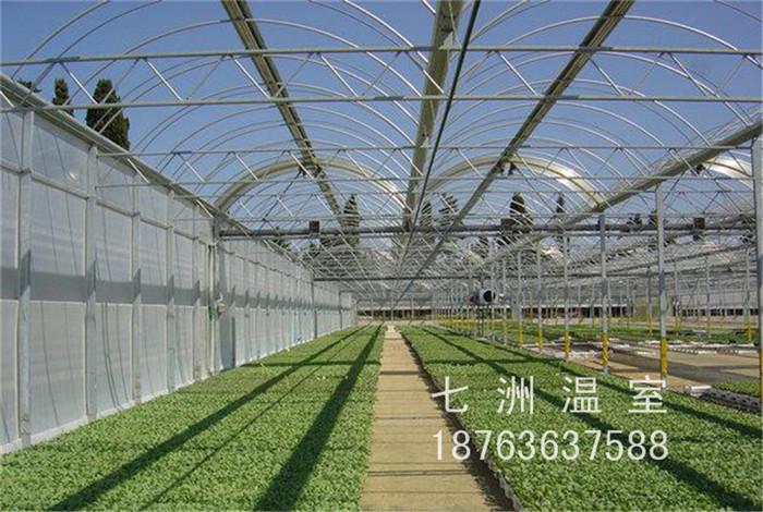 山东靠谱的多功能温室大棚|铁皮石斛温温室大棚建造