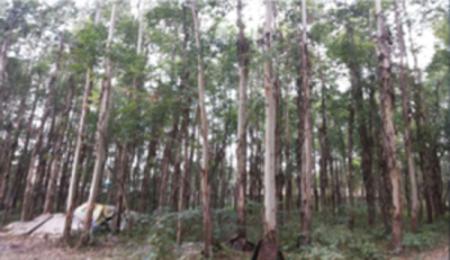四川策划咨询公司推荐|园林创新的哪儿有