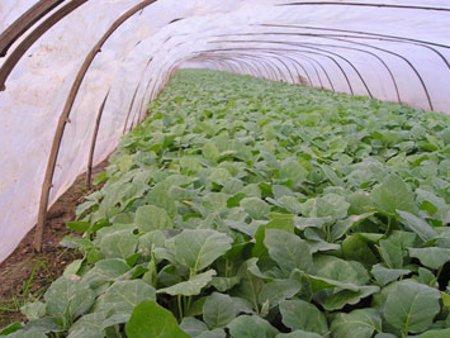 潍坊三层EVA农膜|哪里能买到口碑好的三层EVA农膜