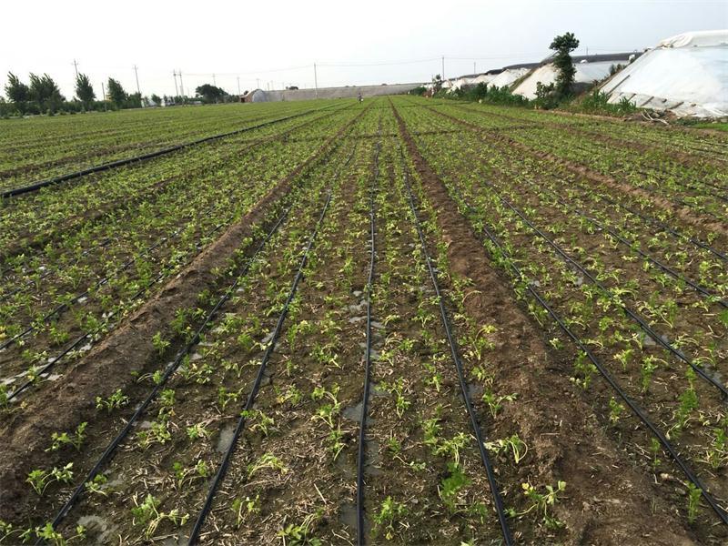 【厂家推荐】质量好的迷宫式滴灌带供应商 大棚种植滴灌带厂家