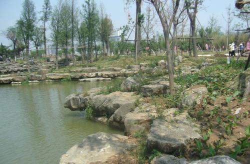 天成园林提供的驳岸石价钱怎么样 东明驳岸石