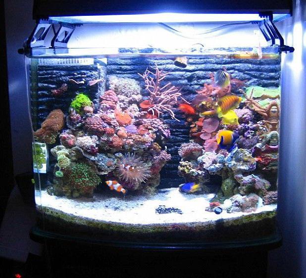 厂家直销 鱼缸 水族箱 乌龟 金鱼 生态创意水族箱 价格优惠
