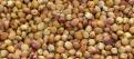 旺川求购玉米、大豆、高粮