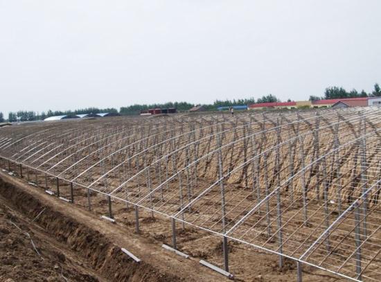 寿光温室工程厂家 潍坊区域有信誉度的温室工程
