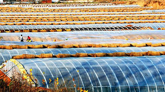 潍坊优惠的灌浆膜哪有卖-涂覆膜生产厂家